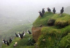 puffin-colony-faroe-islands-1160x788